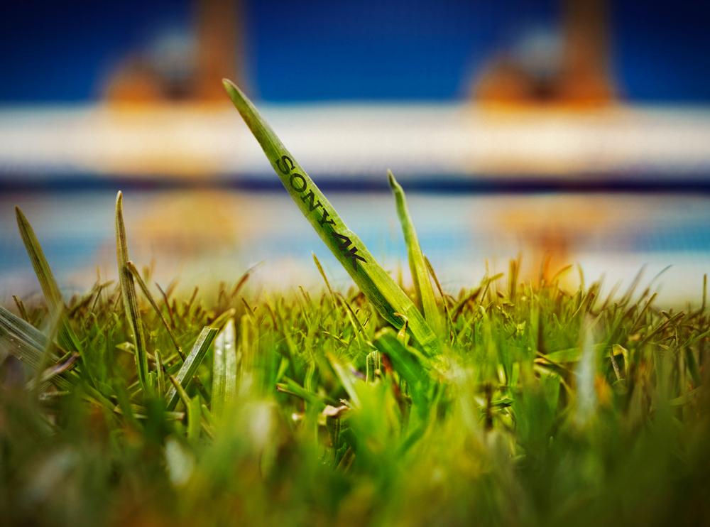 sony-microtising-grass